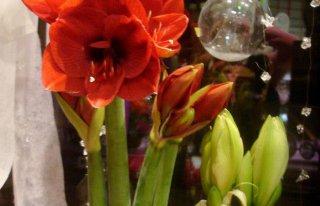 Kwiaciarnia Trendy flor Warszawa