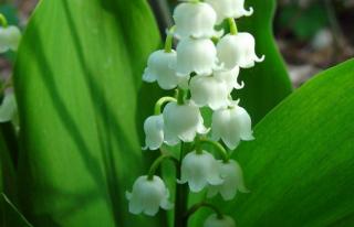 Kwiaciarnia Konwalia w Ustroniu Ustroń