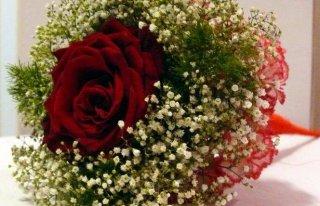 Kwiaciarnia Modrzewiowa Gdynia
