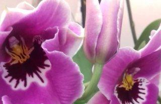 """Kwiaciarnia """"Florystyczny Zakątek"""" Pelplin"""