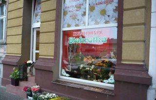 Kwiaciarnia Stokrotka Chojnice