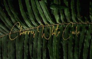 Cherry White Code Fotografia Chełm