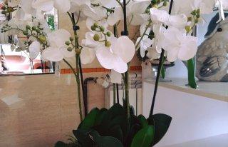 Kwiaciarnia Halina Starogard Gdański