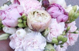 Kwiaciarnia Tulipan Cieszyn Cieszyn