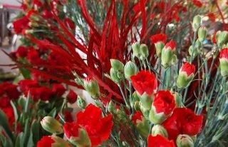 Kwiaciarnia Alokazja Miastko