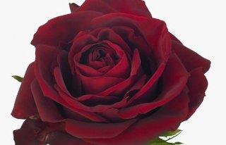 Kwiaciarnia Bajka Świdnica