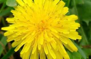Kwiaciarnia Esy-Floresy Kozienice