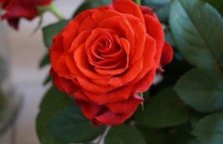 Kwiaciarnia Studio Rosa Sieradz