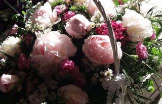 Kwiaty-Piwonii Gdańsk