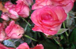 Kwiaciarnia .VIOLA. Kwiaty Gdynia