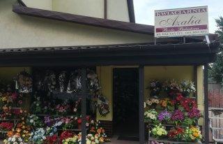Kwiaciarnia Azalia Konin Konin