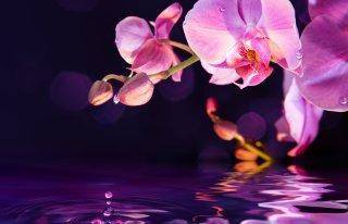 Kwiaciarnia Orchidea Mońki