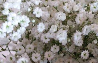 Kwiaciarnia Rose Rybnik