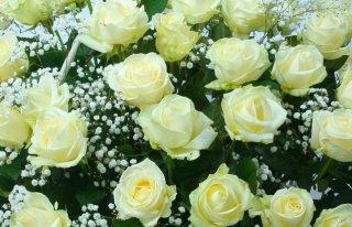 Kwiaciarnia Sasanka Toruń