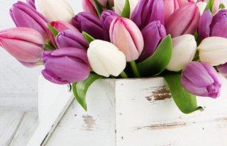 Hurtownia Kwiatów Gryfice