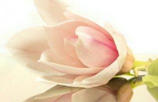 Magnolia Strefa Urody Skierniewice