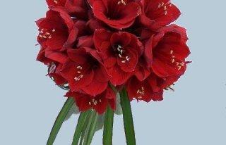 Kwiaciarnia Amarylis Sanok