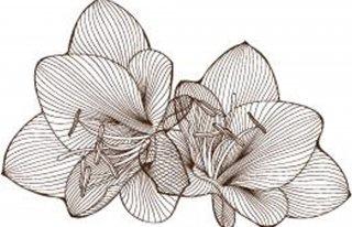 Kwiaciarnia Lilia Chorzów