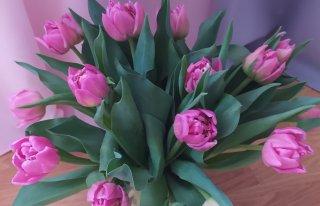 Kwiaciarnia AGA Nowy Sącz