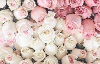 Kwiatuszkarnia Gubin