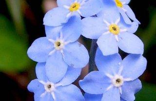 Kwiaciarnia Niezapominajka Chorzów