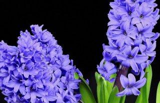Kwiaciarnia Aga Bytom