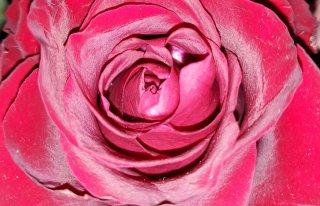 Kwiaciarnia Allegresse Babice