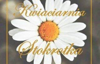 Kwiaciarnia Stokrotka Doroty Sendal Oława