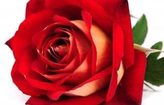 Kwiaciarnia Ciorach Katarzyna Warta