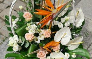Kwiaty u Halinki Nowa Ruda