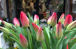 Kwiaciarnia Dianthus Kraków